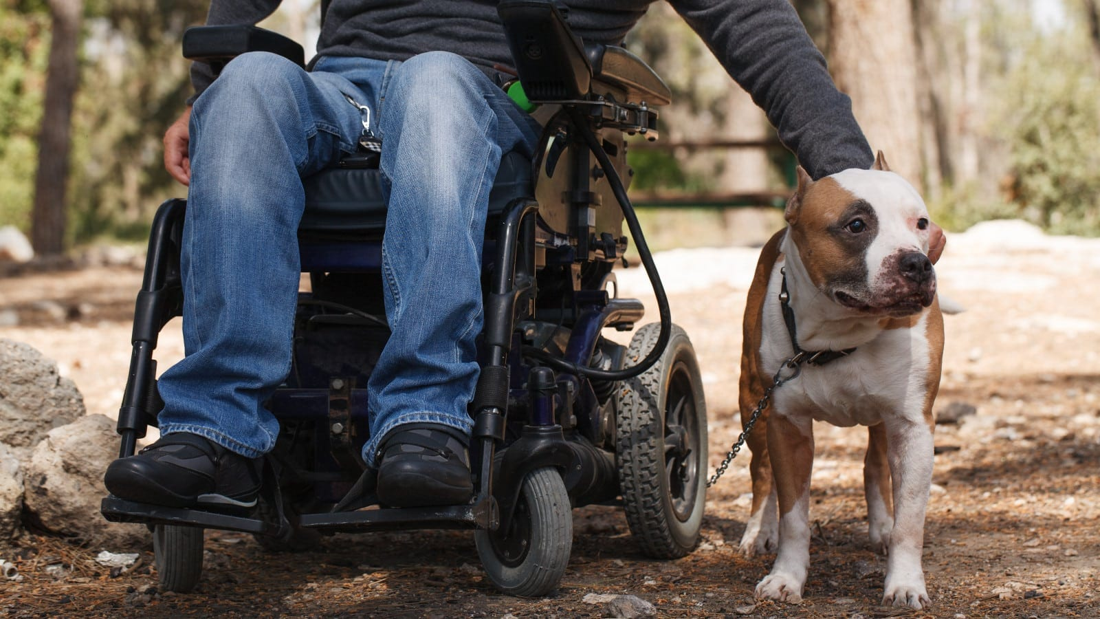 Man In A Wheelchair Petting His Dog Stock Photo